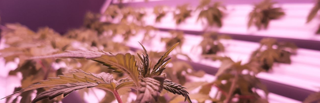 Photo of rotational hydroponic garden system of Roto-Gro Inc.